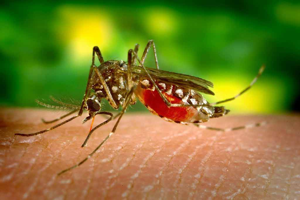 Scientists predict dengue risk for Brazil World Cup