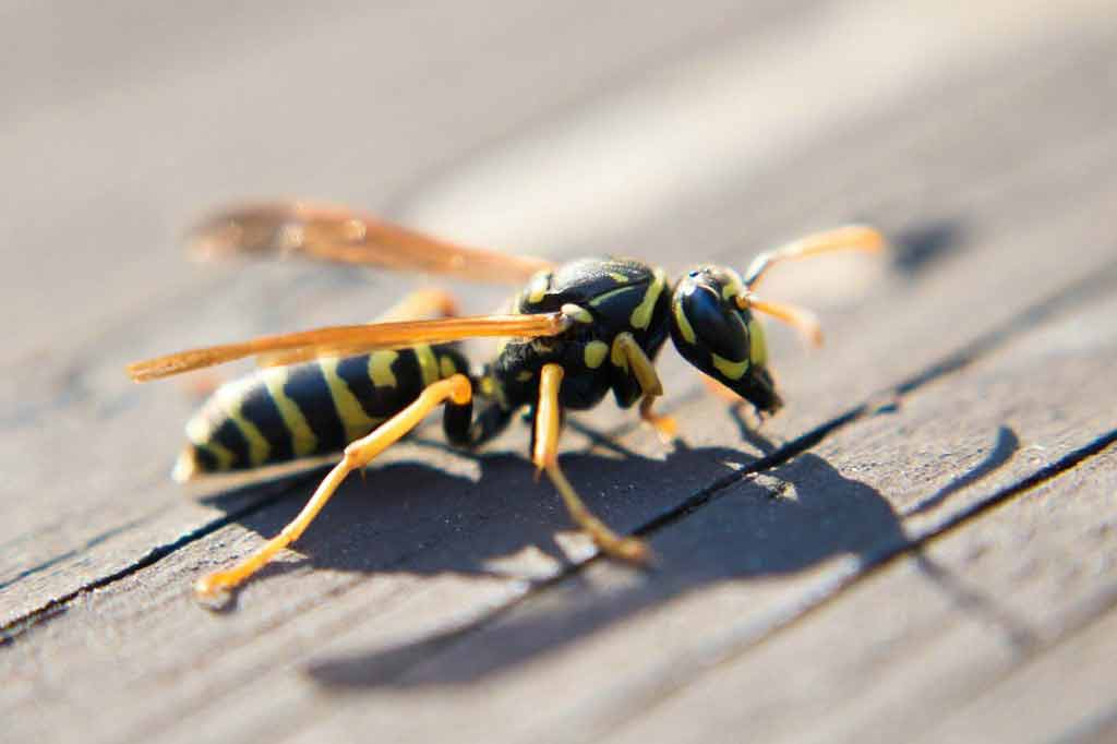Should we worry about the 'flesh-eating killer bug'?