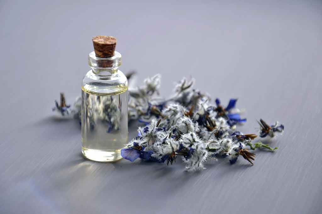 Lavender scent may help with anxiety in mice